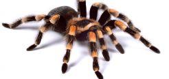 Самые интересные факты о пауках