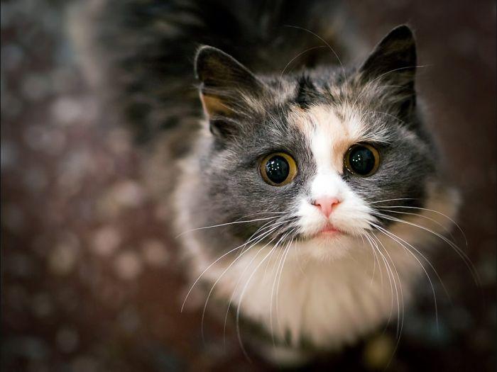 Кошка - удивительное домашнее животное, приносящее много радости и счастья. Узнаем самые интересные факты о кошках