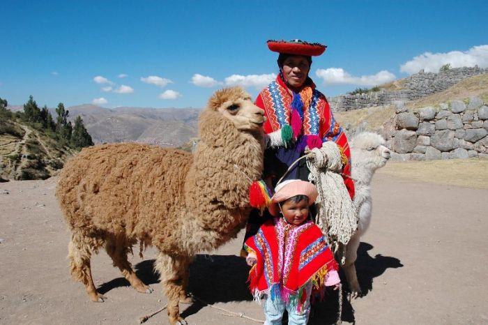Самые интересные факты о Перу. Перуанцы одомашнили лам примерно 3 тысячи лет назад.