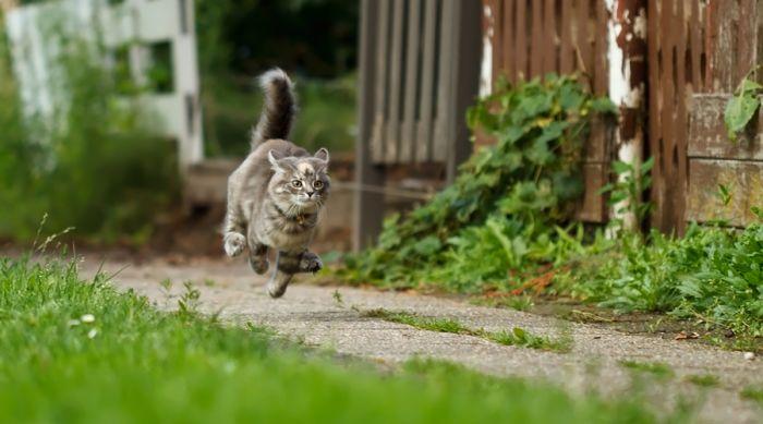 Кошка - удивительное домашнее животное, приносящее много радости и счастья. Узнаем самые интересные факты о кошках. С какой скорость бегает кошка? кошка может развивать скорость до 50 км/ч