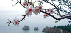 Факт, что Япония - это страна восходящего солнца. Самый интересные и удивительные факты о Японии, культуре, жителях и традициях этой прекрасной страны. цветение сакуры ханами