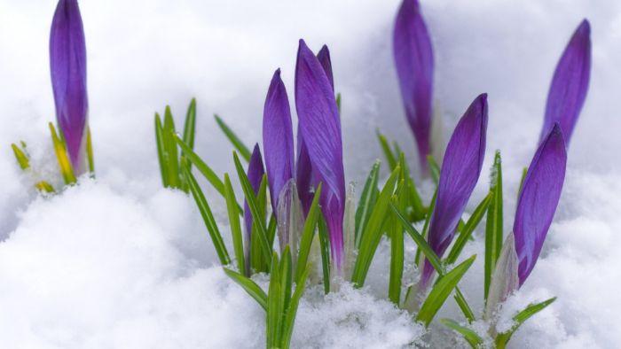 Народные приметы о весне. Зима и мудрость предков. Приметы весны. весенние приметы.