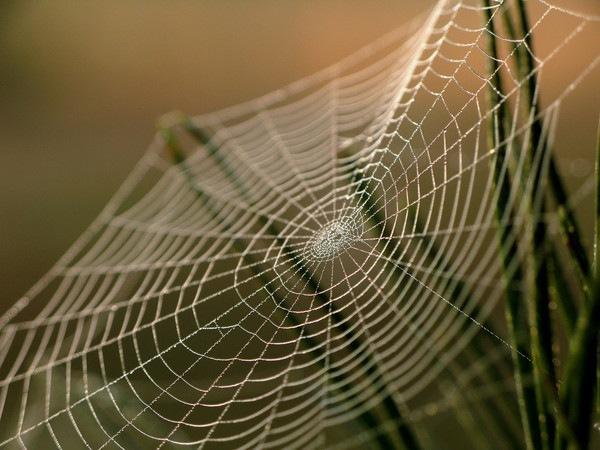 Самые интересные факты о пауках. Пауки используют паутину чтобы ловить пролетающую мимо добычу.