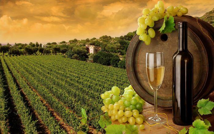 Кипр - это маленькое государство на острове в средиземном море. Самый интересные факты о кипре, остров, море, отдых, туризм, виноделие и вино на кипре