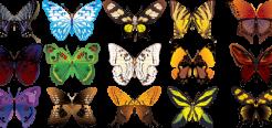 Бабочки — наверное самые красивые насекомые. Бабочки всегда являлись символом любви, красоты, чистоты и радости. Невозможно представить, как из невзрачных гусениц появляются эти прекрасные создания. 15 самых интересных фактов о бабочках.