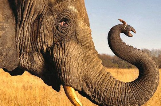 Факты о мышах, самые интересные факты о мышах, мыши, животные, факты, слон боится мышей, мыши, слоны