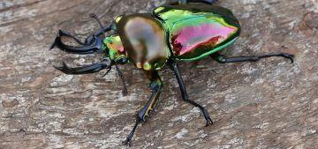 Факты о жуках, самый интересные факты о жуках, жуки, насекомые, виды жуков