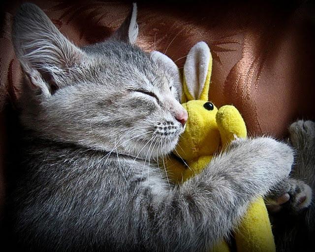 Кошка - удивительное домашнее животное, приносящее много радости и счастья. Узнаем самые интересные факты о кошках. 2/3 жизни кошки спят