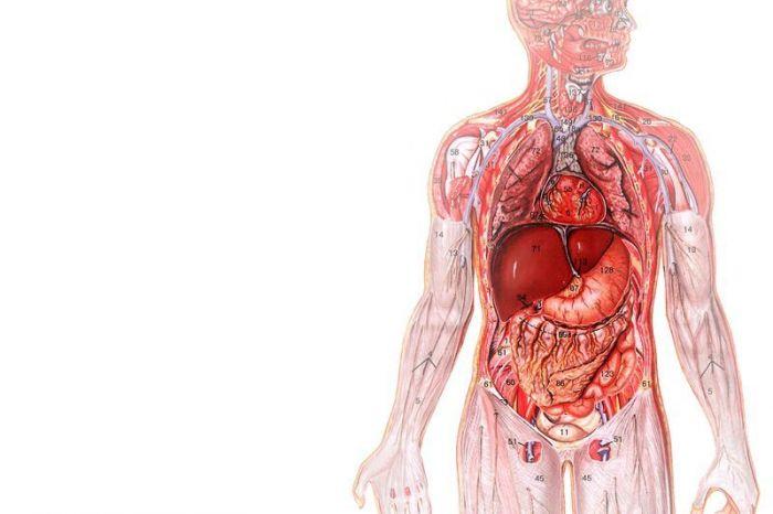 В результате эволюции человеческого организма многие органы потеряли свои былые функции. Теперь это просто ненужные органы в организме человека.