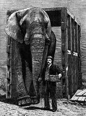 Слоны - самые крупные млекопитающие животные на планете. Самые интересные факты о слонах. Самый большой и крупный слон в мире - джамбо
