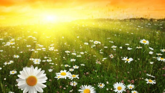 Народные поверья и приметы на июль. Июль это краса лета, с которым приходит зеленое пиршество года, это и сладкие ягоды, травы медовые, цветы многоцветные, свежие овощи, да душистый хлеб.