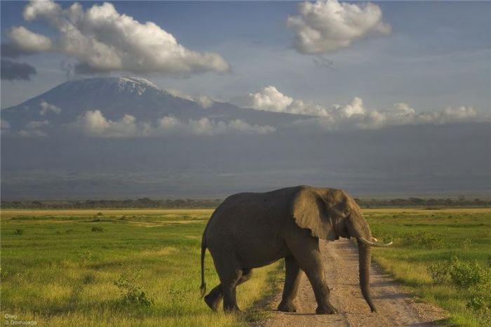 Вулкан Кибо на горе Килиманджаро - наивысшая точка в Африке. Интересные факты об Африке. Африка - это огромный континент расположенный между атлантическим и индийским океаном. В Африке множество видов климата и огромное количество стран. Культура и религия африки, ее традиции - все это увлекательно и интересно.